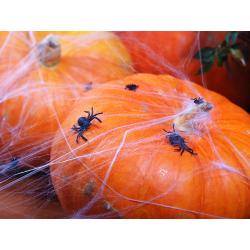 Araignées noires plastique x 20